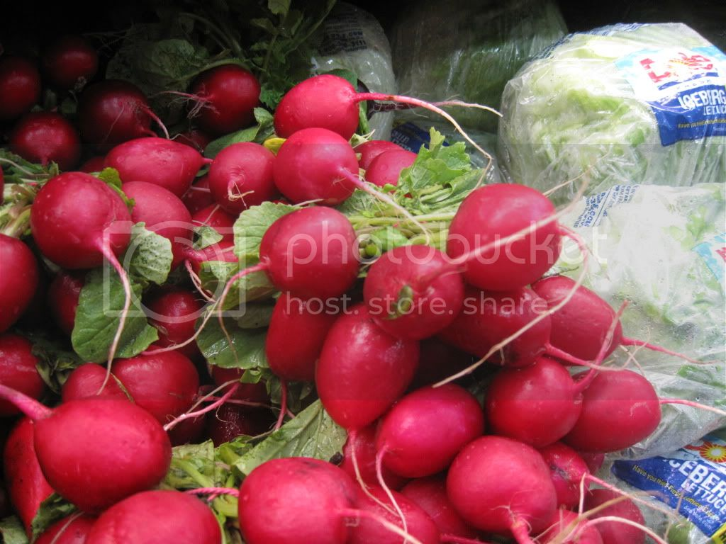 Radishes at Maan Farms